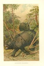 Nosorozec indicky
