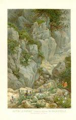 Alpen  Leinkraut Linaria alpina