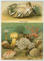 Obri musle a koraly