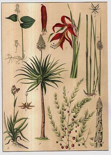 Rostliny lucni kvety travy | antikvariat - detail grafiky