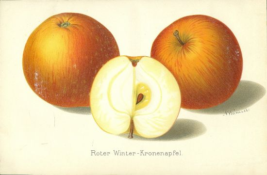 Jablka | antikvariat - detail grafiky